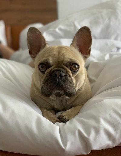 Hotel mit Hund München Edda © Gernekochen
